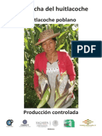 La cosecha del huitlacoche