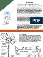 sistema-nervioso humano.pptx