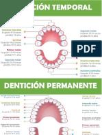 denticion