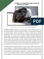 Por Que Se Categoriza a La Orangután Sandra Como Una Persona No Humana