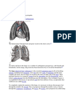 Lung With Pic
