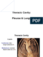 Anatomy, Lecture 5, Pleurae & Lungs (slides)