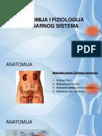 Anatomija II