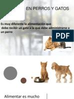 nutricion en perros y gatos.pptx