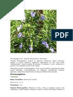222309981-Fitoenergetica.doc