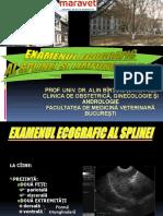 ECO SPLINA.pdf