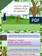 Partes y Funciones de Una Planta.