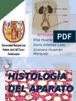 Histologìa Del Aparato Urinario (Exp)
