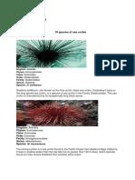 10 Species of Urchin
