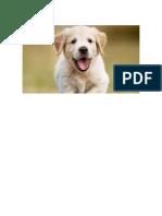 Perro Bonito