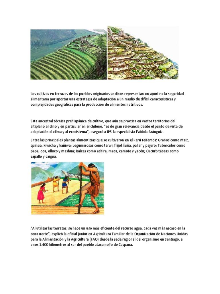 Cultivo Inca