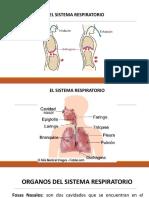 familiasdevirusfitopatgenos-121031220133-phpapp01