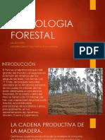 tecnología forestal