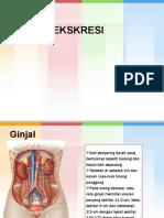 PPT Sistem Ekskresi 1