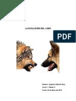 LA EVOLUCIÓN DEL LOBO.docx