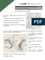 FF1- Reprodução.docx