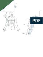 meridiano pulmon-fotos.docx