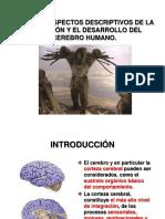 EVOLUCION_CORTEZA