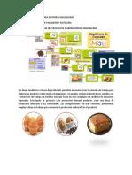 Líneas de Producción Para Muffins y Magdalenas - Copia
