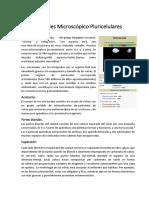 Animales Microscópico Pluricelulares.docx