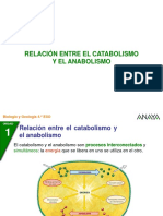 6-2-_Relacion_catab_anabol