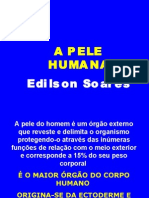 Biologia PPT - A Pele Humana