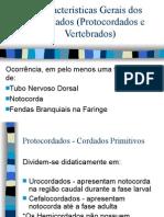 Biologia PPT - Características Gerais dos Cordados