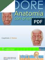 Capitulo_2_Dorso
