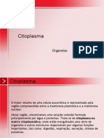 Biologia PPT - Citoplasma - Organelas