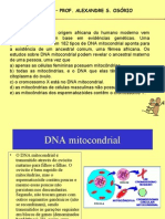 Biologia PPT - DNA Mitocondrial