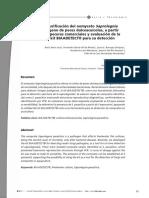 Dialnet-AislamientoYPurificacionDelOomycetoSaprolegniaPara-2986547.pdf