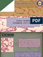 Rahmatia (F1C116086) Bakteri