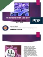 Wahyuni Mia Lestary-Bakteri-Kimia B