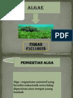 Ppt Alga (Fiqrah)