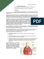 Sistema Respiratori 2