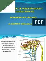 Concentración y Dilución Urinaria Imptec