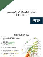 Inerv.mb.SupAML