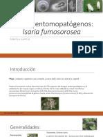 Hongo Entomopatógeno_Isaria Fumosorosea_Paecilomyces Fumosoroseus