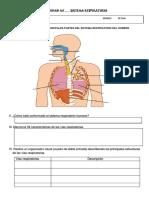 Ficha de Trabajo Sistema Respiratorio