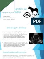 Examen ecográfico de abdomen equino.ppt