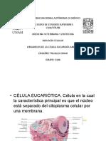 Organelos de La Celula Procariota Animal
