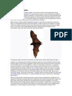Bats Nternal Systems