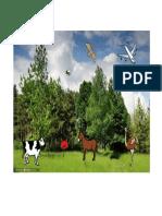 conciencia fonologica A(Elena) (1).pdf