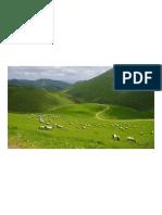 pays-basque©PSaint-jean.pdf