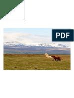 chevaux-islande_430.pdf