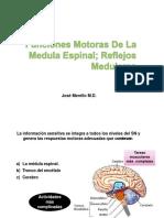 Funciones Motoras de La Medula Espinal Reflejos Medulares Dr Merello