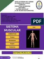 Anatomia de los Musculos