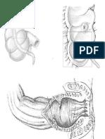 anatomia 1.0.pdf