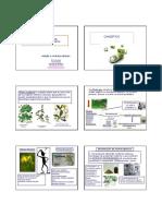 Fitofarmacos_Clase_MM.pdf