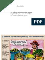 COMIDA DE LAS GALLINA PONEDORAS.pptx